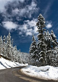 Fresh Snow — Stock Photo
