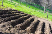 Prepared rows for potato planting — Stock Photo