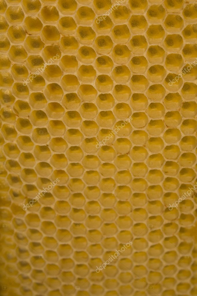 Honey Comb Background — Stock Photo #2887055
