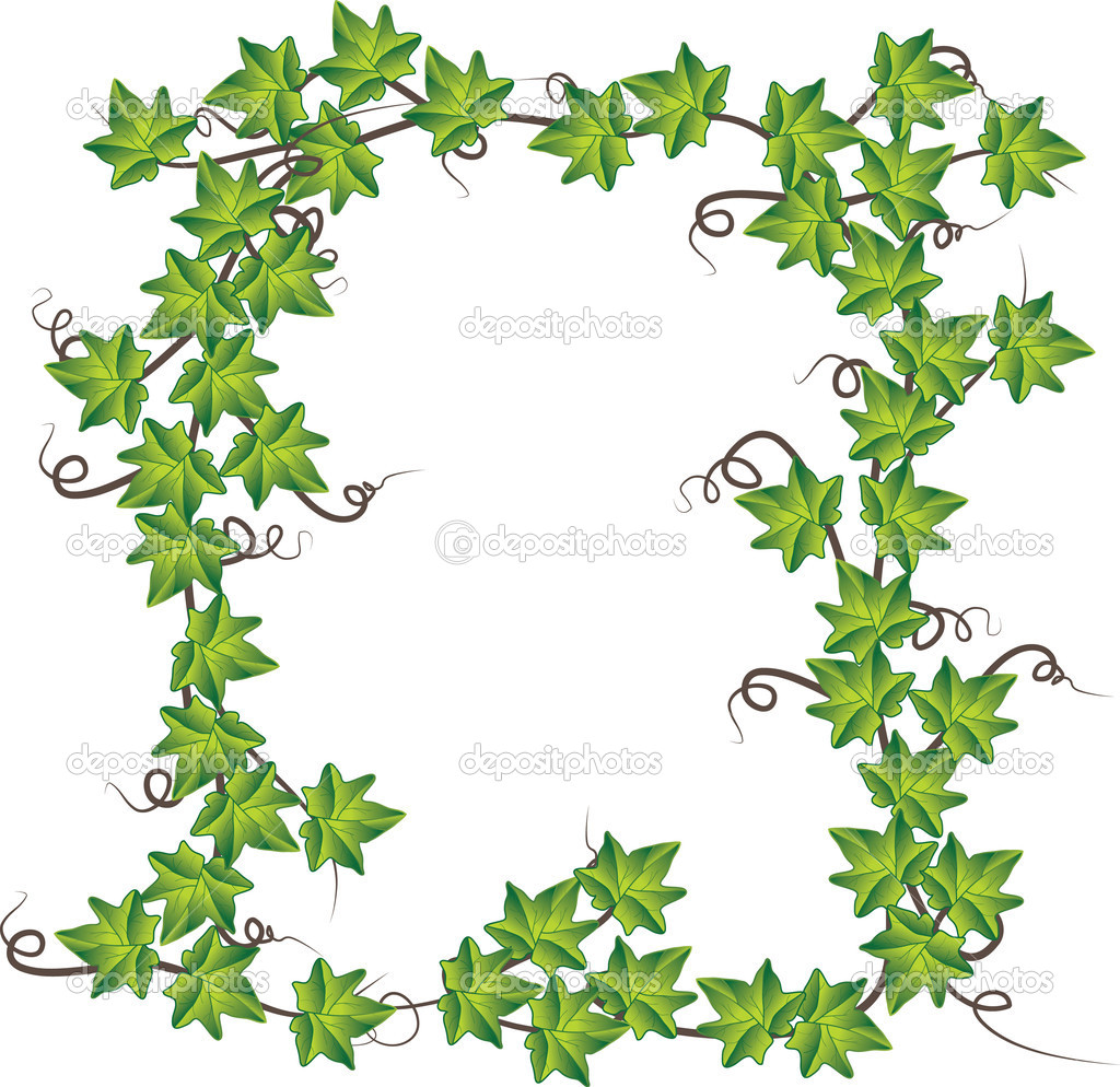 Green ivy . Vector illustration — Stock Vector #3730512
