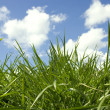 Grass — Stock Photo #2894429