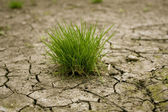 Green grass on cracked earth — Stock Photo