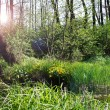 Sun rays in the swamp — Foto de Stock