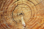 Drewniane tekstury cięcia backgraund — Zdjęcie stockowe