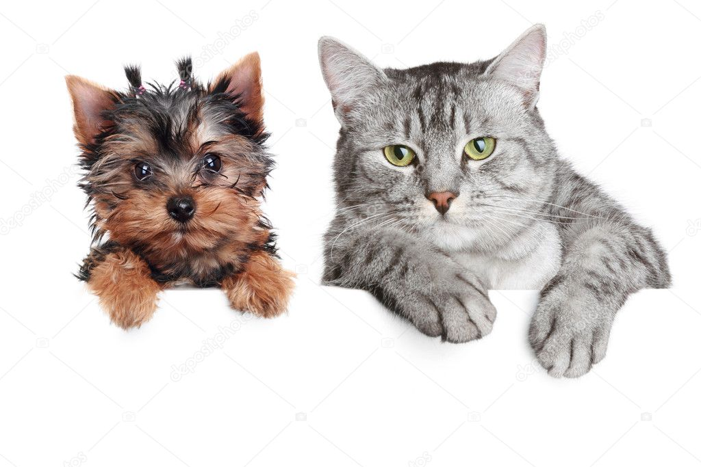 Close-up portrait of a cat and dog, isolated on a white background  — Stock Photo #3078132