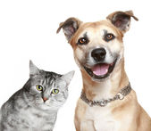Cat and dog — Foto de Stock