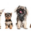Group of young dogs — Stock Photo