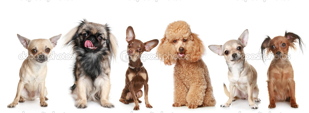 Group of young dogs, isolated on a white background — Stock Photo #3466699
