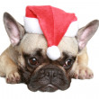 French bulldog puppy in christmas hat — Stock Photo #3659165