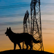 Silhouette of a Dog — Stock Photo