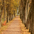 Autumn wayside trees — Stock Photo