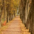 Stock Photo: Autumn wayside trees