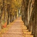 Autumn wayside trees — Stock Photo