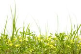 Wild meadow flowers and grass — Stock Photo