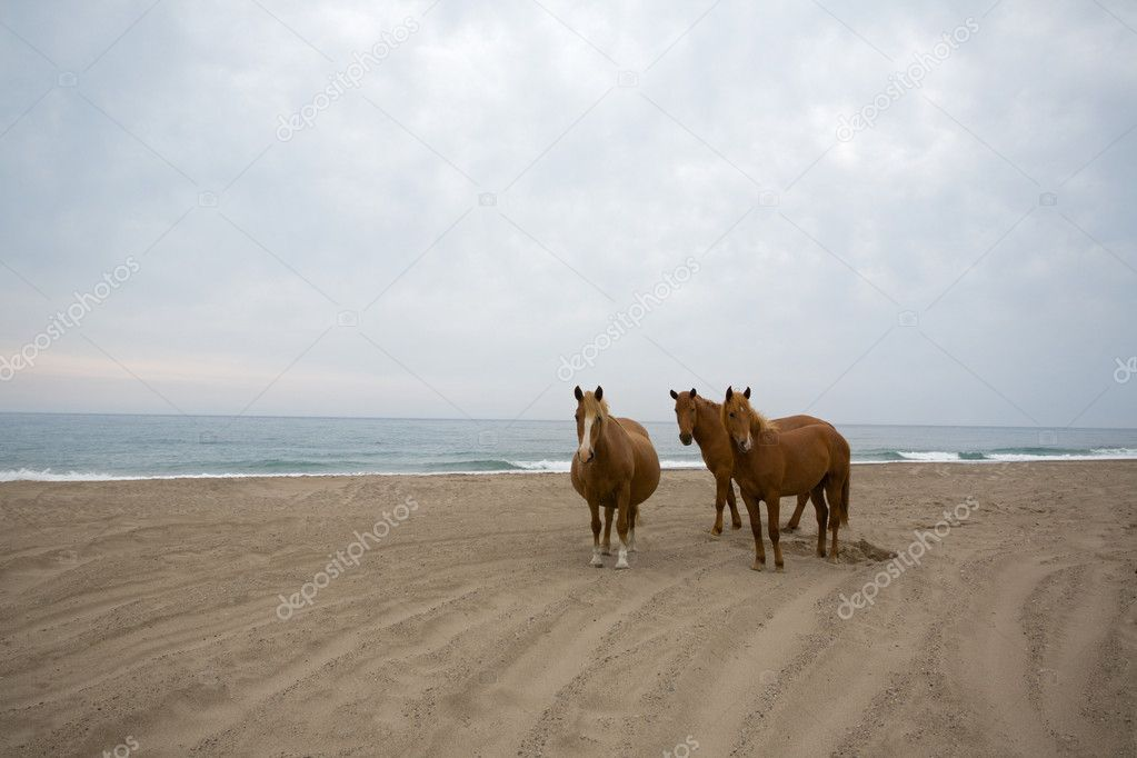 Horses on the beach. Morning. Rain clouds. — Stock Photo #3262641