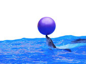 Dolphin playing with ball in blue water — Stock Photo