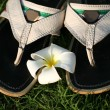 Sandals and flower - Zdjęcie stockowe