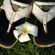 Sandals and flower - Stock Photo