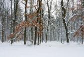 Winter park — Foto Stock