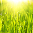 Green grass sunrise — Stock Photo