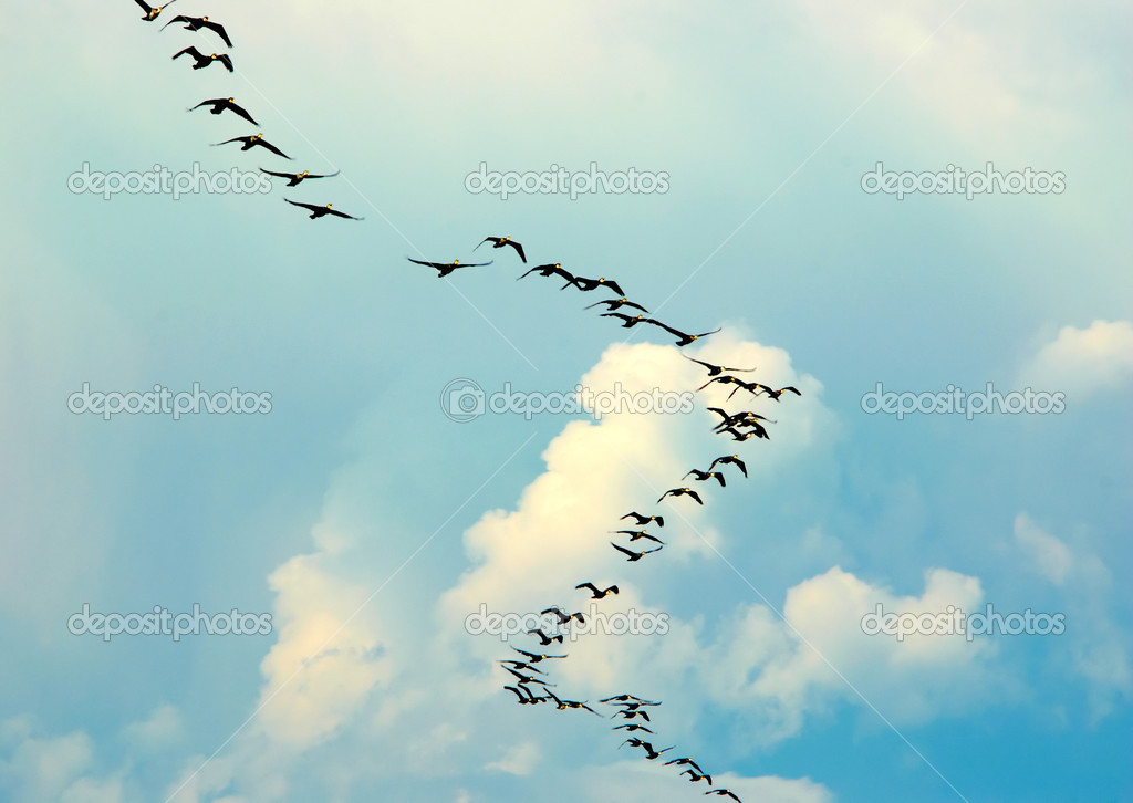 Silhouette of flying birds — Stock Photo #2812514