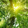 Stock Photo: Sun in deep forest background
