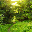 Stock Photo: Green summer forest