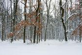 Winter park — Stockfoto