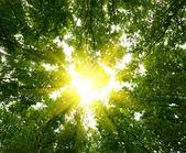 Sol no fundo da floresta profunda — Foto Stock