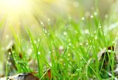 Green grass with waterdrops. Shallow DOF — Stock Photo