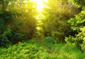 Grünen wald mit sonnenstrahl — Stockfoto