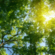 Sun in deep forest background — Stock Photo #3497121