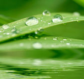 Green grass with raindrops background — Stock Photo