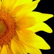 Royalty-Free Stock Photo: Part of sunflower on black background