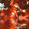 Red autumn leaves reflecting in the water — Stock Photo