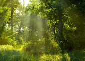 Morning summer forest — Stockfoto