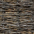 Stock Photo: Wattled wall