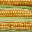 Corns — Stock Photo