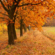 Autumn day in the park - Stock Photo