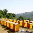 Stock Photo: Bee-garden