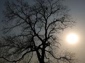árvore da noite — Foto Stock