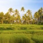 Kind on rice terraces, Bali, Indonesia — Stock Photo
