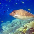 Indian ocean.   Fishes in corals - Stock Photo