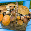 Stock Photo: Basket, full mushrooms