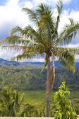 Pirinç terasları, bali, endonezya — Stok fotoğraf