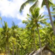 Indonesia. Bali. Hut under palm trees — Stock Photo #3194561