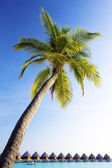Palm tree bent above waters of ocean. — Stock Photo