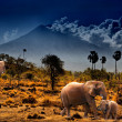 Elephants on background of mountains — Stock Photo