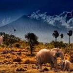 Elephants on background of mountains — Stock Photo