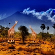 Stock Photo: Two giraffe in savannah on background of mountains